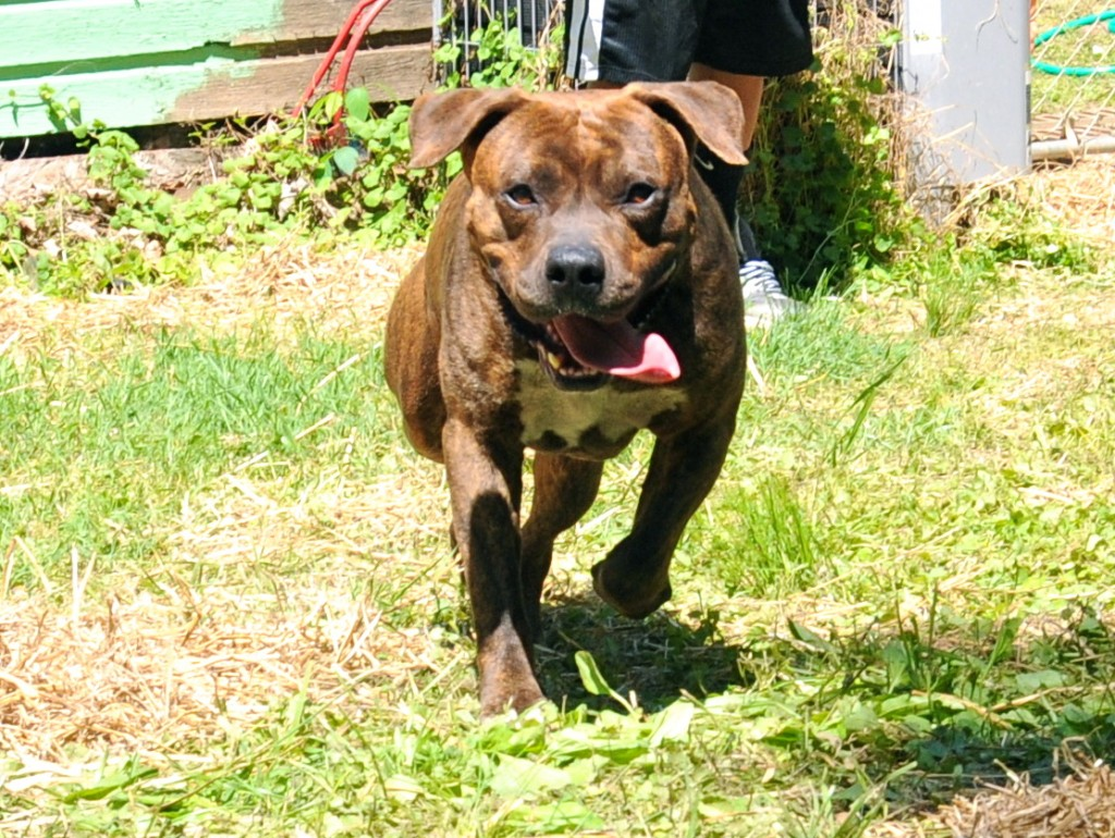 runningbrindle